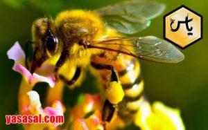 خرید عسل گشنیز طبیعی در ایران