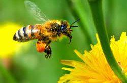 عسل کناراصل
