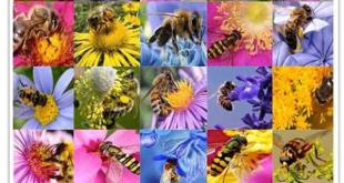 خرید عسل چند گیاه