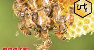 سایت خرید عسل
