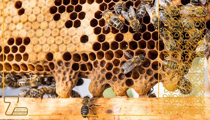 فروش اینترنتی عسل اکالیپتوس